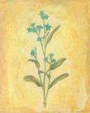 Fleurs de la campagne I Affiches par Al Safir