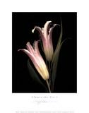Fleurs-de-Lis I Posters by S. G. Rose