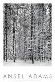Foresta di pini nella neve, Parco nazionale di Yosemite, 1932|Pine Forest in Snow, Yosemite National Park, 1932 Poster di Ansel Adams