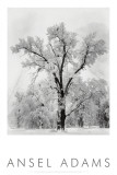 Oak Tree, Snowstorm, Yosemite National Park, 1948 Posters by Ansel Adams