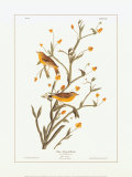 Yellow Red-Poll Warbler Poster par John James Audubon