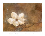 Magnolia in Bloom Prints by Carmen Dolce