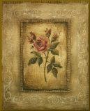Savin Rose - mini - Gold Trim Umocowany wydruk autor Kimberly Poloson