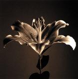 Flower Series IV Plakater af Walter Gritsik