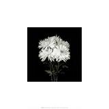 Flower Series IX Posters af Walter Gritsik