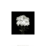 Flower Series IX Prints by Walter Gritsik