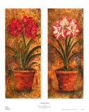 Amaryllis Petites Prints by Judy Shelby