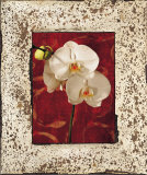 Orchids Poster by John Seba