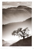 Black Oak Prints by Jean Miele