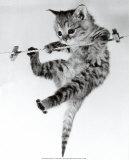 Chaton sur corde à linge Affiches par Erik Parbst