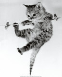 Kitten on a Clothes Line Posters van Erik Parbst