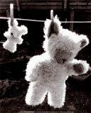 Teddy Bear Drying Prints by U. Dresing