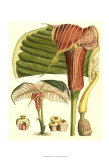 Botanical Fantasy II Pôsteres