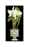 Orchids in Silver II Posters