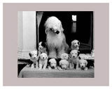 Sheep Dog and Pups Prints