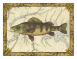 Yellow Perch on Map Poster