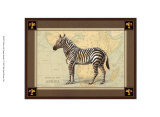 Zebra with Border I Print