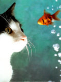 Chat et poisson Affiches