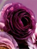 Roses Art par Kei Muto