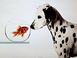 Chien dalmatien regardant un poisson dalmatien Posters par Michel Tcherevkoff