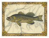 Black Bass on Map Print