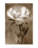 Purslane Prints by Christine Zalewski