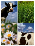 Pastoral Cow Posters by Panais &amp; Morcime Dumoulin