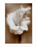 Gladiolus, Art Print