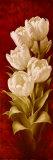 Splendidi tulipani II Stampa di Igor Levashov