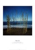 Calumet Bamboo Circle Posters by Nils-udo