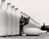 楽園の子猫たち 高画質プリント