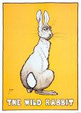Wild Rabbit Posters