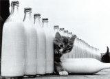 Paradiso di latte Poster