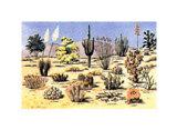 Cacti & Desert Flora Art