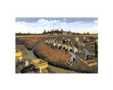 Cape Cod - Cranberry Harvest Posters
