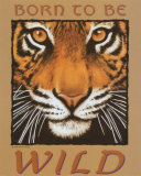 Tiger Eyes Print by Peter Kull