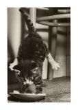 Cat Tipsy Schilderij