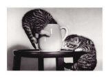 Cat Coffee Cup Twins Reprodukcje
