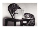 2匹の猫とコーヒーカップ 高画質プリント