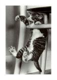 夢中になっている猫 高品質プリント