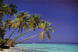 Leaning Palms Prints