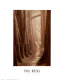 Cypress Trail Print by Paul Kozal