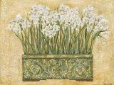 White Narcissus Prints by Eva Misa