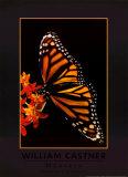 Monarch Prints