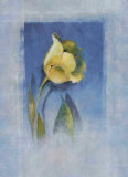Yellow Tulip Print by Matilda Ellison