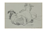 Two Sheep Giclee Print by John Linnell