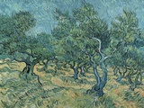 The Olive Grove Giclee Print by Vincent van Gogh