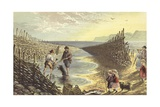 Fishing Weir Giclee Print by Alexander Francis Lydon