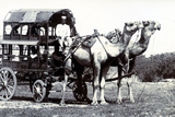 Camel Carriage, India Photographic Print