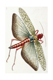 Egyptian Locust, 1790 Giclee Print by Frederick Polydor Nodder